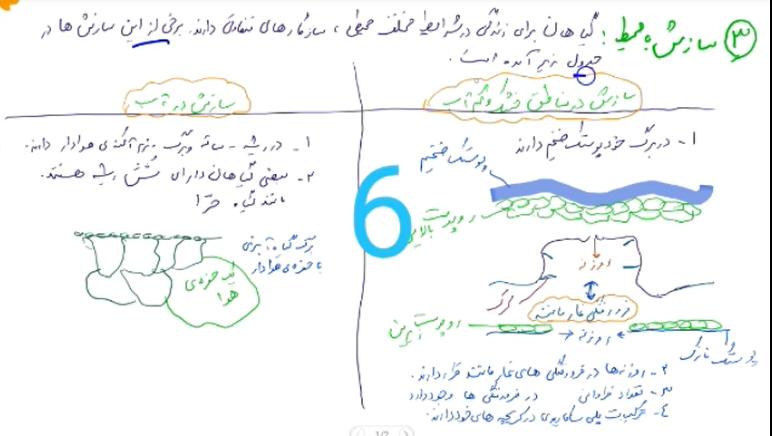 زیست-دهم-فصل۶-گفتار۳-ساختار-گیاهی