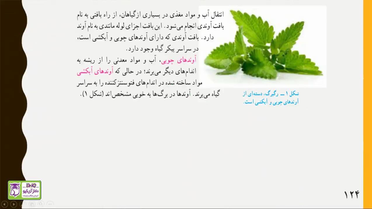 دنیای-گیاهان-انتقال-آب-در-گیاهان-قسمت-دوم-دکتر-آی-کیو