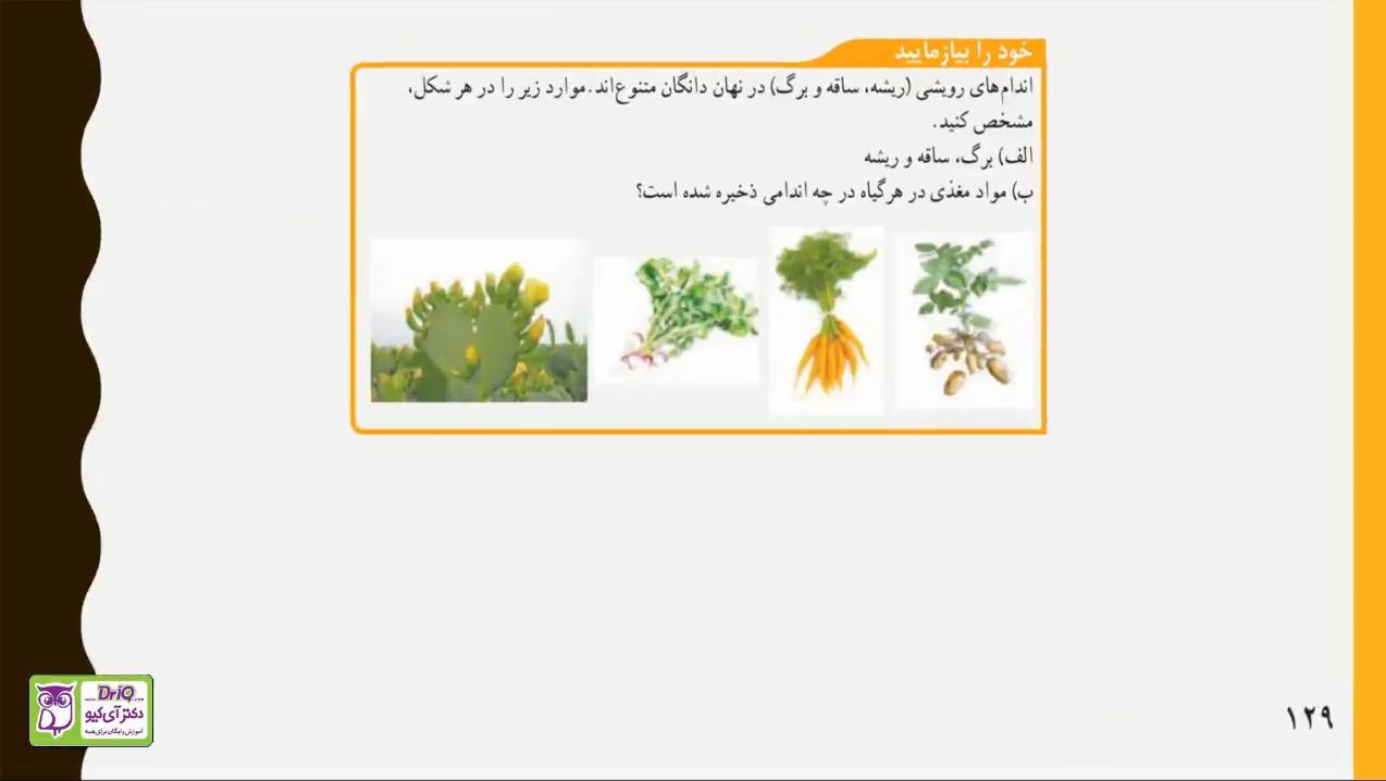 فصل-دوازدهم-دنیای-گیاهان-اندام-هاى-رویشى-قسمت-هشم-دکتر-آی-کیو