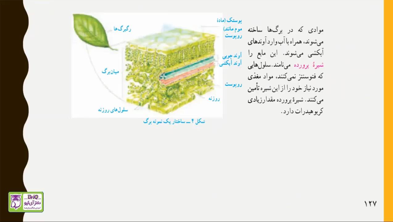 فصل-دوازدهم-دنیای-گیاهان-شیره-پرورده-قسمت-پنجم-دکتر-آی-کیو