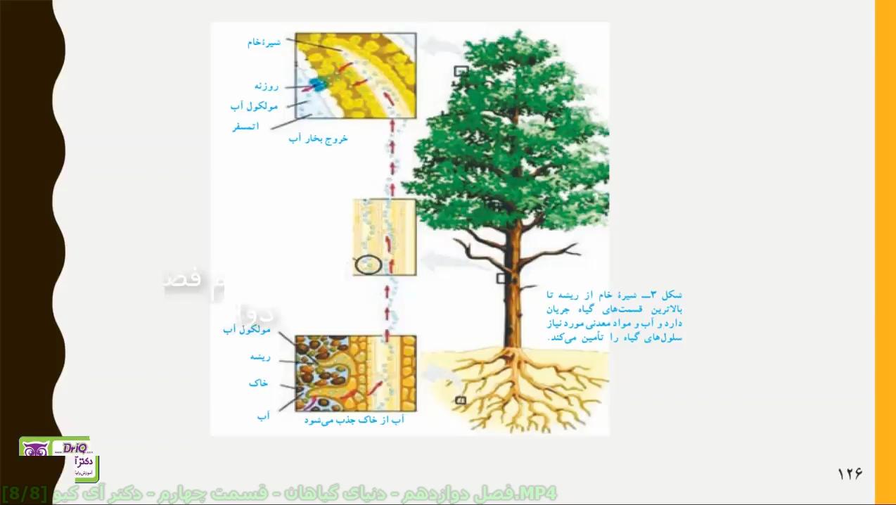 دنیای-گیاهان-قسمت-چهارم-شیره-ى-خام-دکتر-آی-کیو
