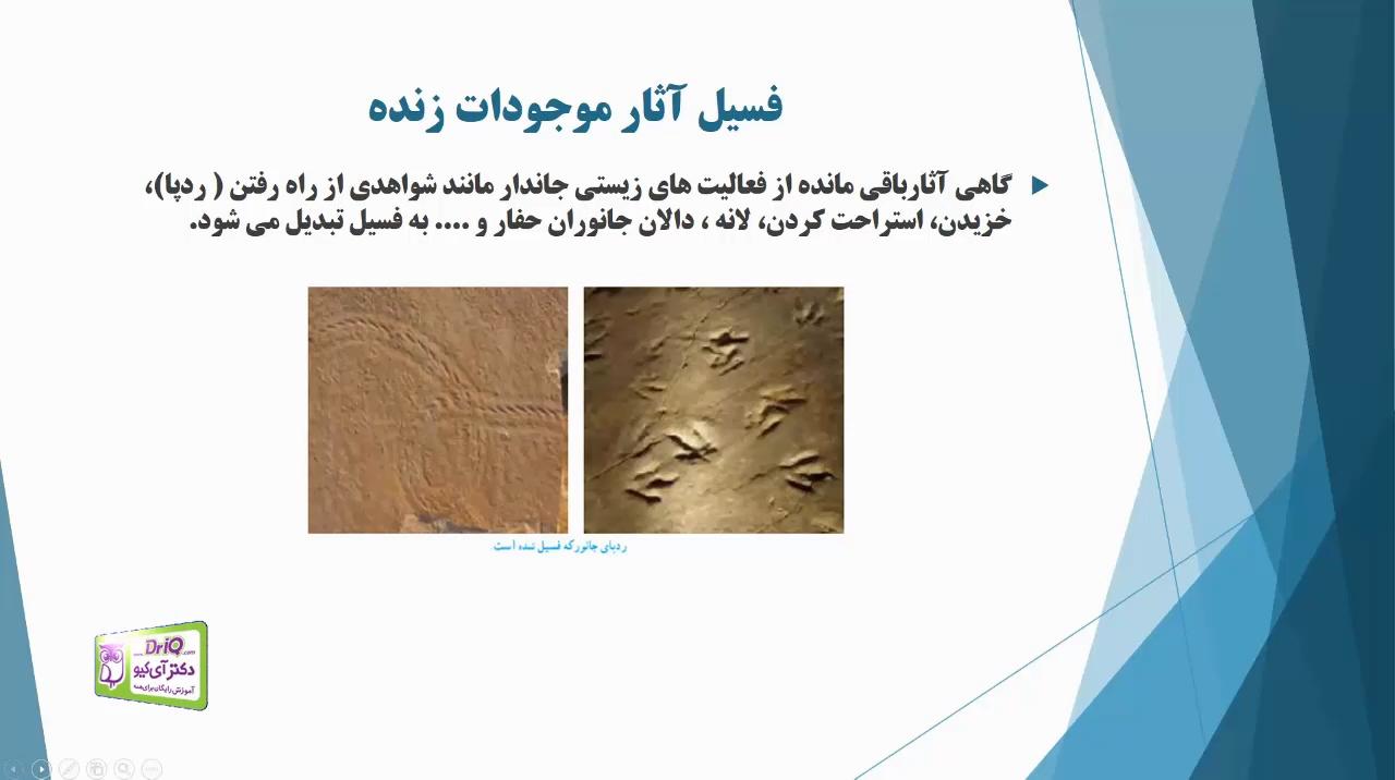 فسیل-آثار-موجودات-زنده-تدریس-دکتر-آی-کیو