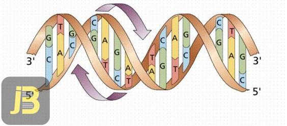 فرآیند ترجمه و پروتئین سازی